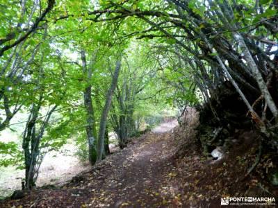 Dehesa Bonita-Abedular Somosierra;calzado para senderismo frente batalla mejores rutas senderismo es